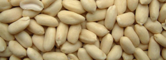 new crop shandong white blanched peanut kernels