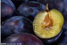 fresh purple grape supplier in China