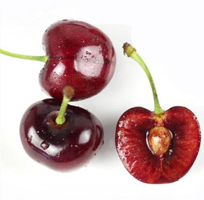 Sweet Cherry Fresh Cherry Export