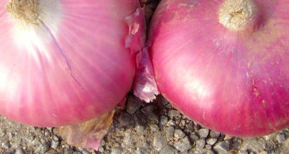 2015 high quality red onions for sale in bulk 5-7cm, 6-8cm, 8cm up