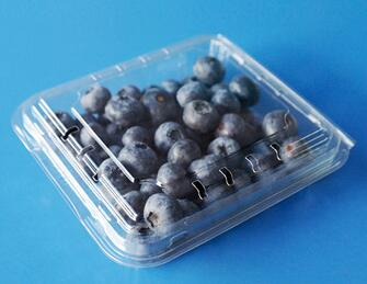 Food Grade Plastic Disposable Blueberry Fruit Packaging Container