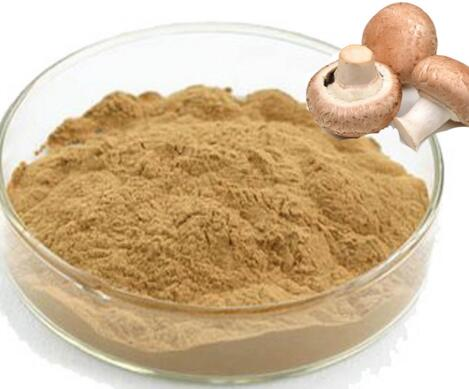 High quality pure nature lentinus edodes mycelium extract for sale,top quality lentinus edodes powder with best price