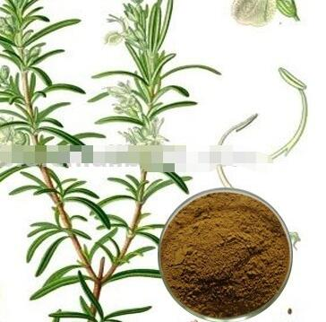 Natural Pure Rosemary Extract/Rosemary Powder Oil/Water Soluble