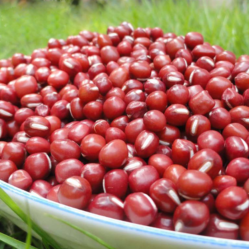 Small red bean with high nutritious healthy food for sale