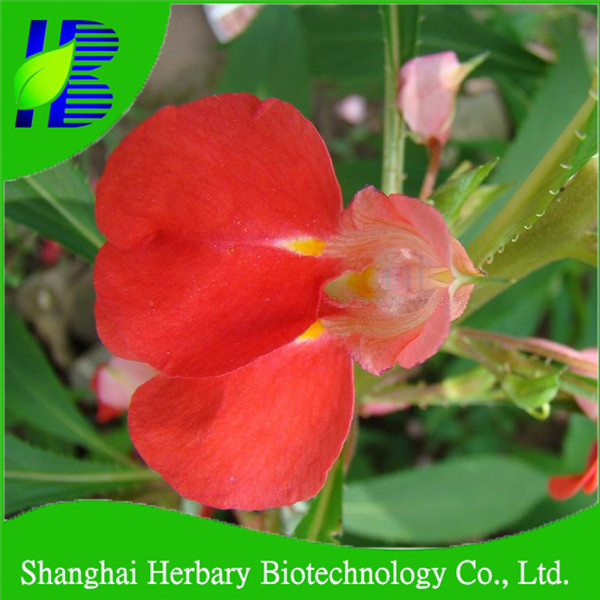 High germination flower seed impatiens balsamina seeds for planting for sale