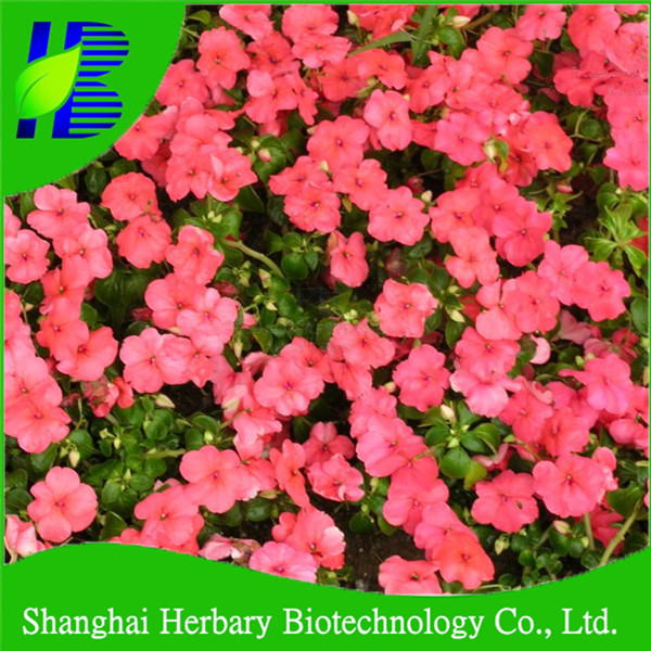 Pink impatiens balsamina flower seeds for planting, hot sale pink flower seeds for sale