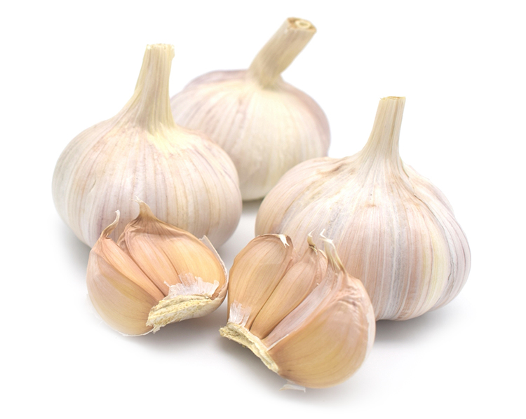 fresh normal white garlic wholesale
