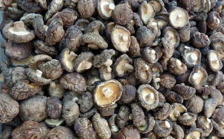 Mushroom mycelium/mushroom extract/dried oyster mushroom for sale