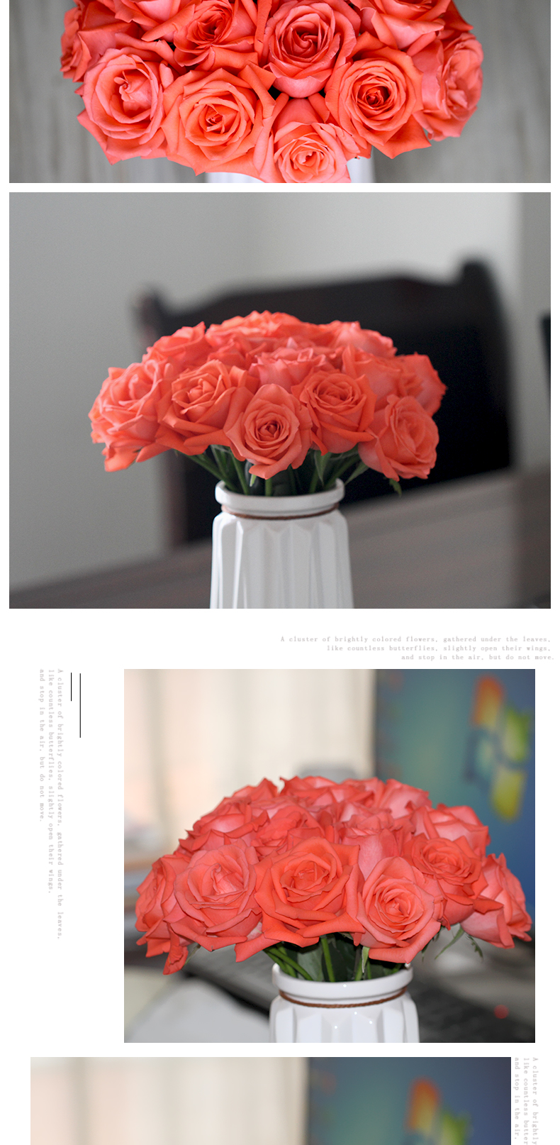 High quality Fresh cut flower rose sale
