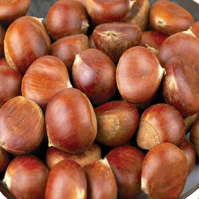 Fresh sweet chestnut for sale