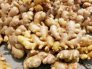 Fresh ginger root wholesale price for sale