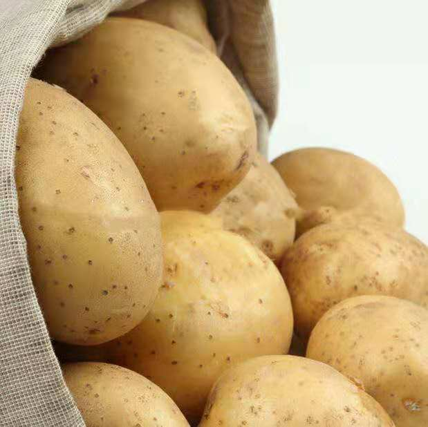 Best Quality fresh Indian Potatoes for sale