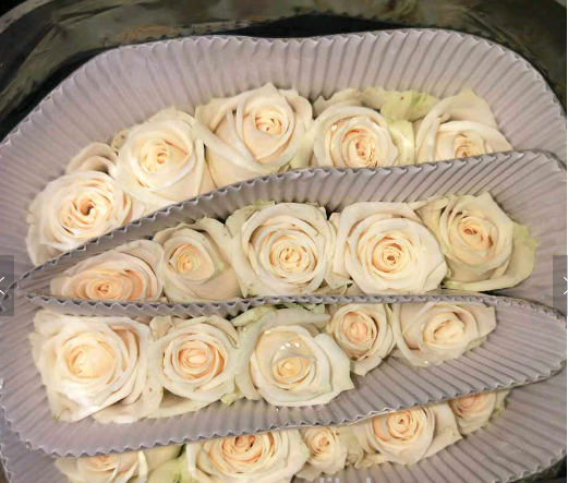 High quality fresh cut rose for wedding export fresh cut flowers roses sale