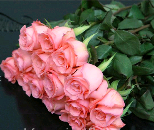 Beautiful pink rose for wedding party long stem flowers fresh cut flowers sale