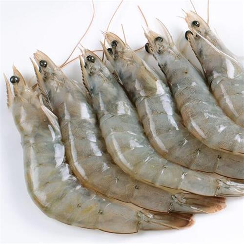 delicious frozen shrimp with better price hot sale