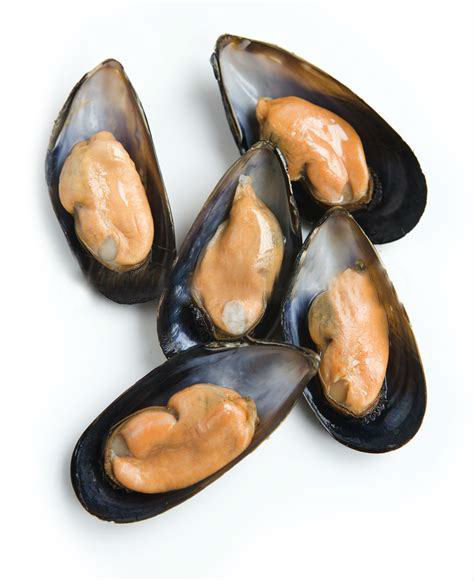 Frozen half shell mussel in high quality