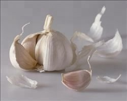 market prices for fresh garlic sale