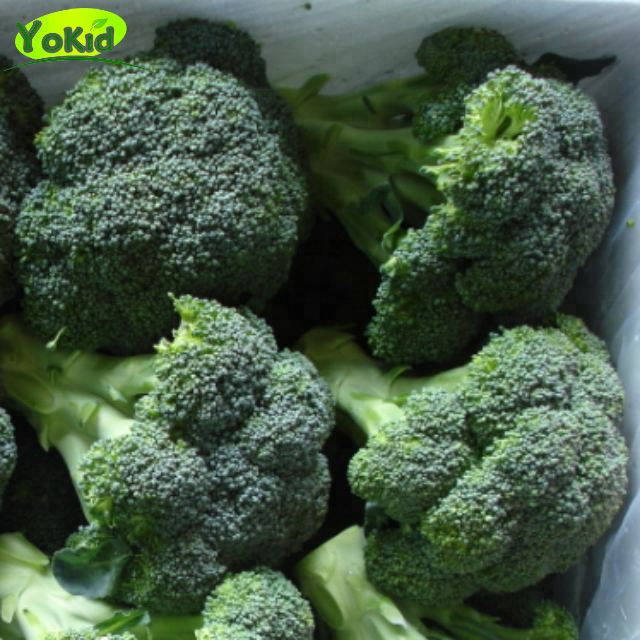 Fresh Broccoli Vegetable Broccoli In Carton for sale