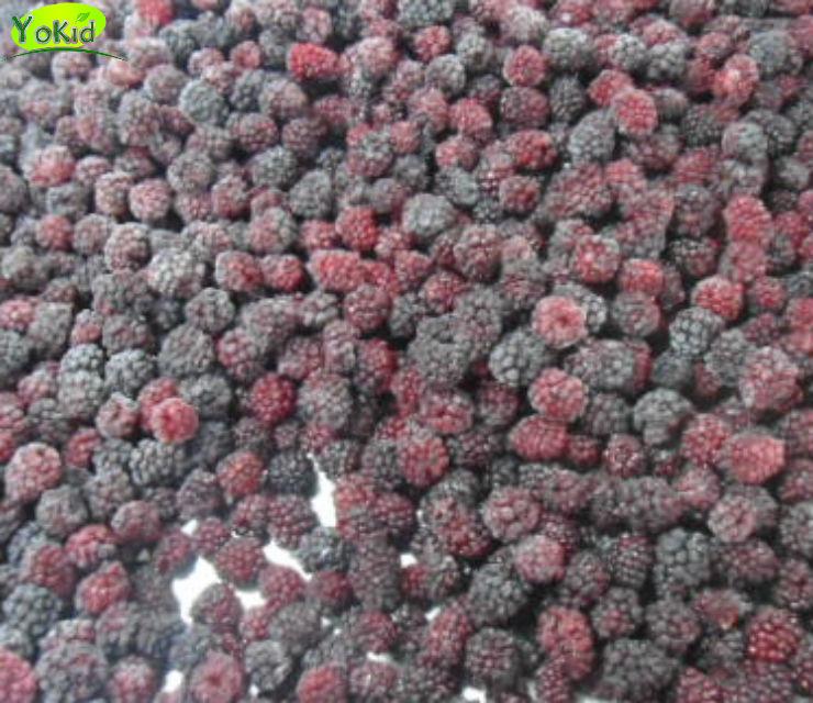 freeze fd blackberry for sale