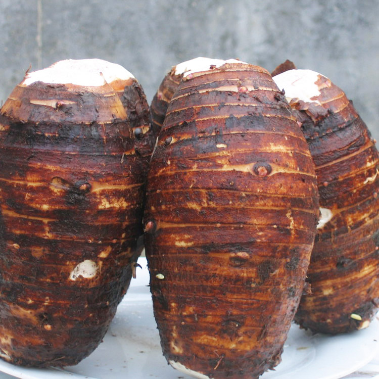 Best Price Fresh Sweet Taro Root For Sale