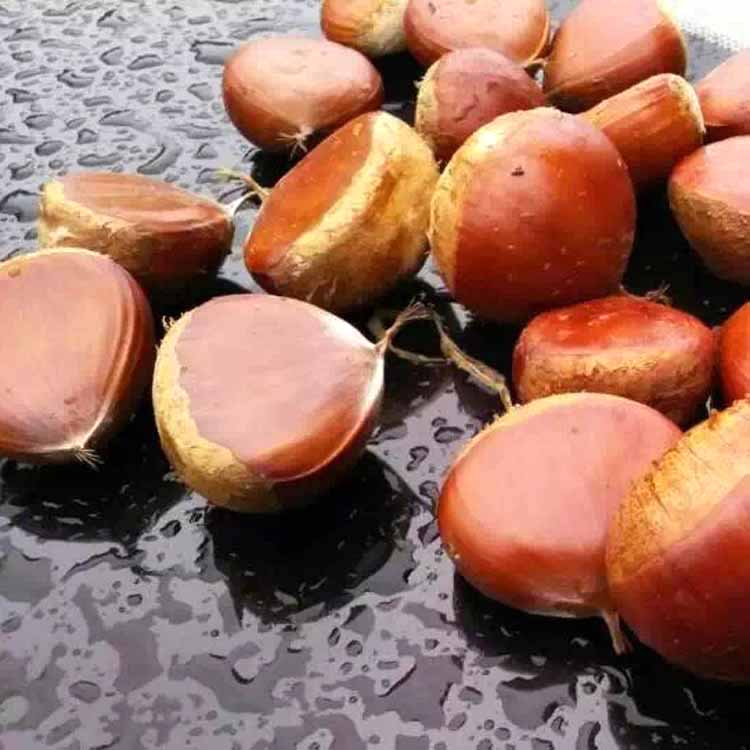 Low Price Fresh Big Buy Chestnut for sale