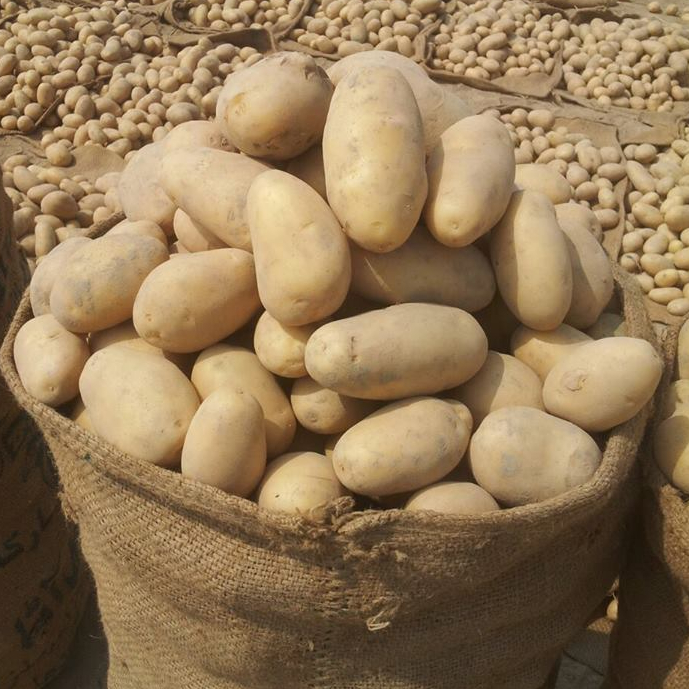 2018 new crop fresh potato sale