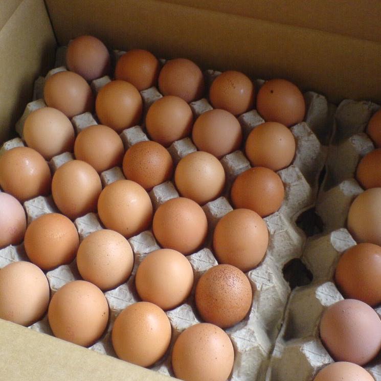white/brown eggs sale