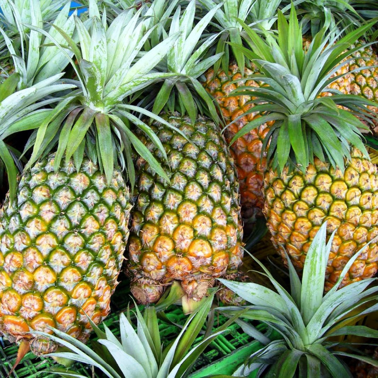 Fresh Pineapple High Quality Low Price For Sale