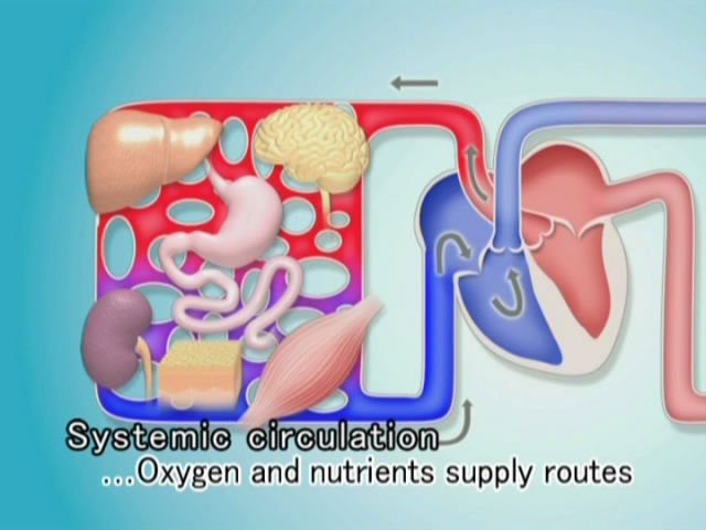 Medical software Circulatory System sale
