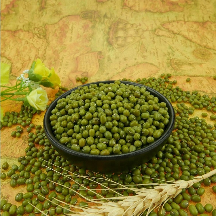 Chinese Organic Spouted Green Mung Beans for sale