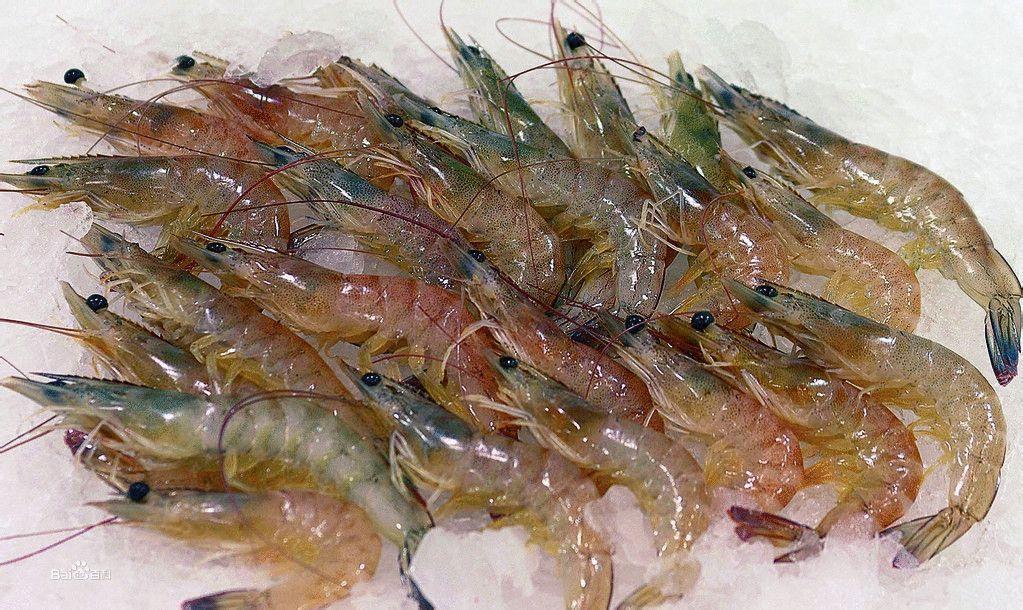 frozen black tiger shrimp for sale